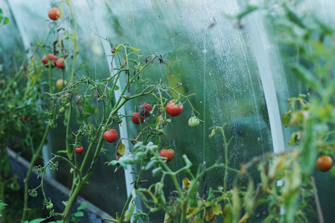 Growshop Pflanzen Gewächshaus