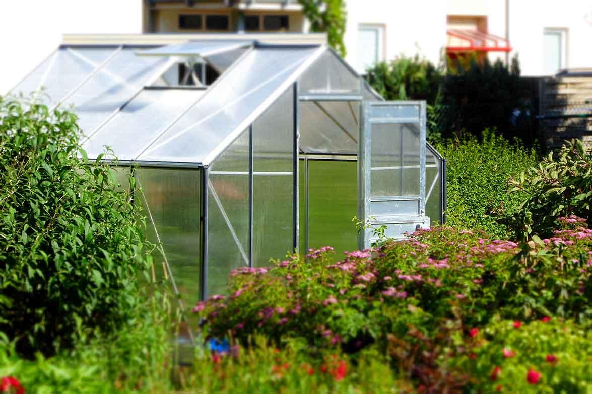 Homebox Growshop Pflanzen Gewächshaus